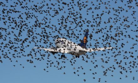 25 Years of Aircraft Wildlife Strikes in USA